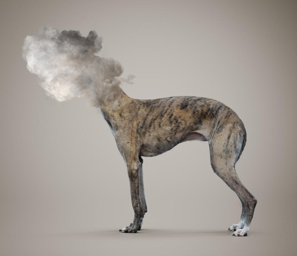 dog_Cloud