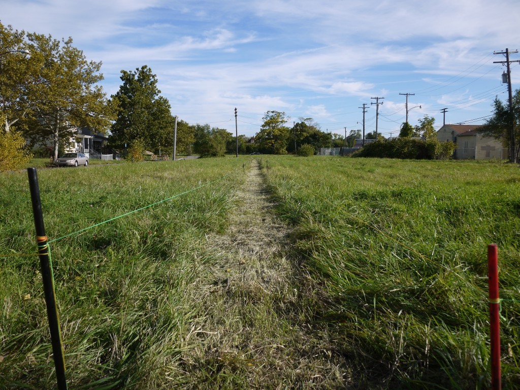 A path cuts through the grass lots in Detroit's North End, Photo: Jean Louis Farges
