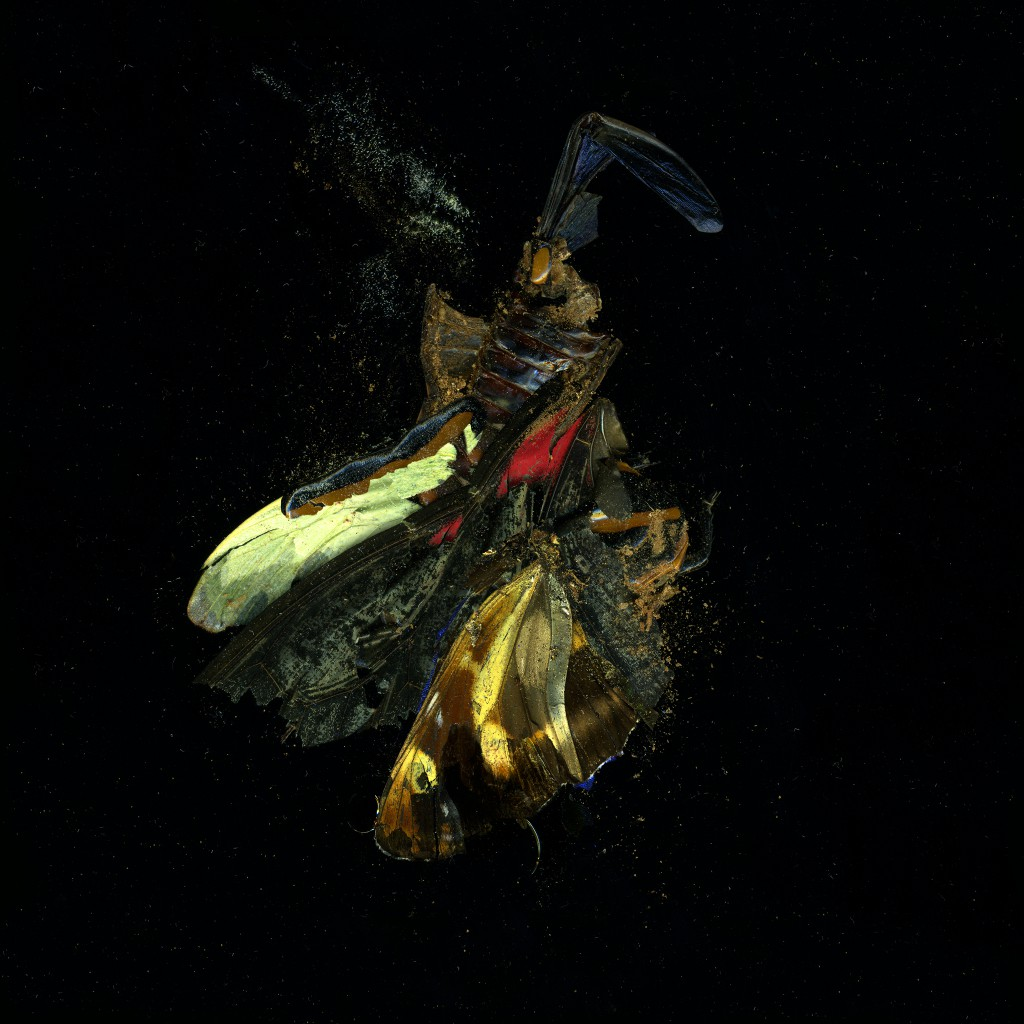 Insecticide 18 (2009) by Mat Collishaw, c-type photographic print.