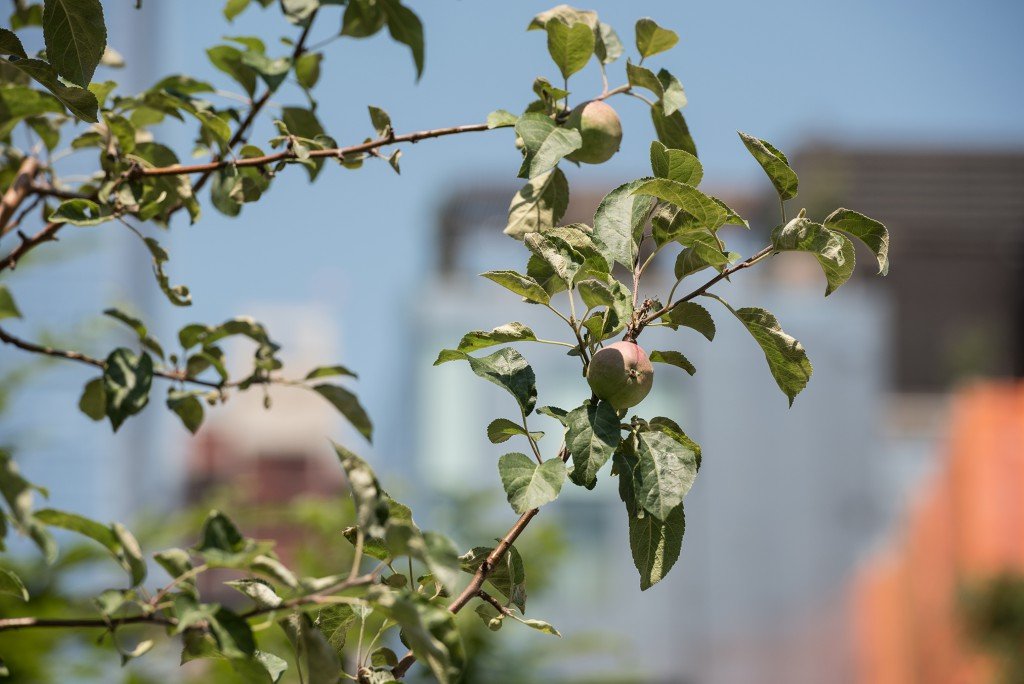 Nari Ward, Smart Tree (detail), 2016. A High Line Commission, on view April 2016 – March 2017. Photo by Timothy Schenck. Courtesy of Friends of the High Line.